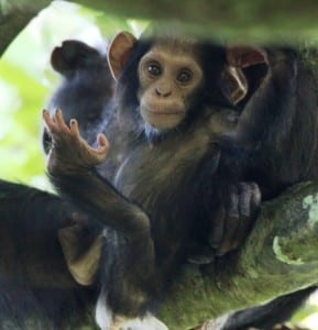 Primates and Poverty Alleviation