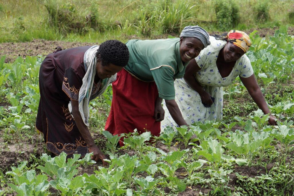 Village Enterprise female entrepreneurs and their farm