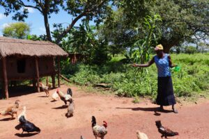 Village Enterprise female business owner feeds her chickens