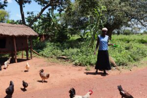 Village enterprise female business owner and her chickens