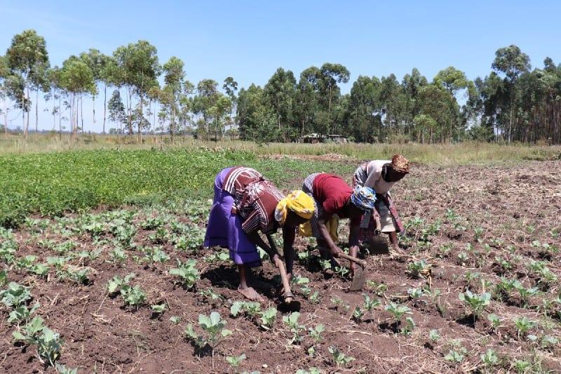 Village Enterprise business owners farming