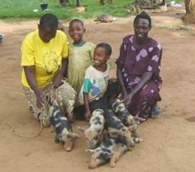 African family and their pigs