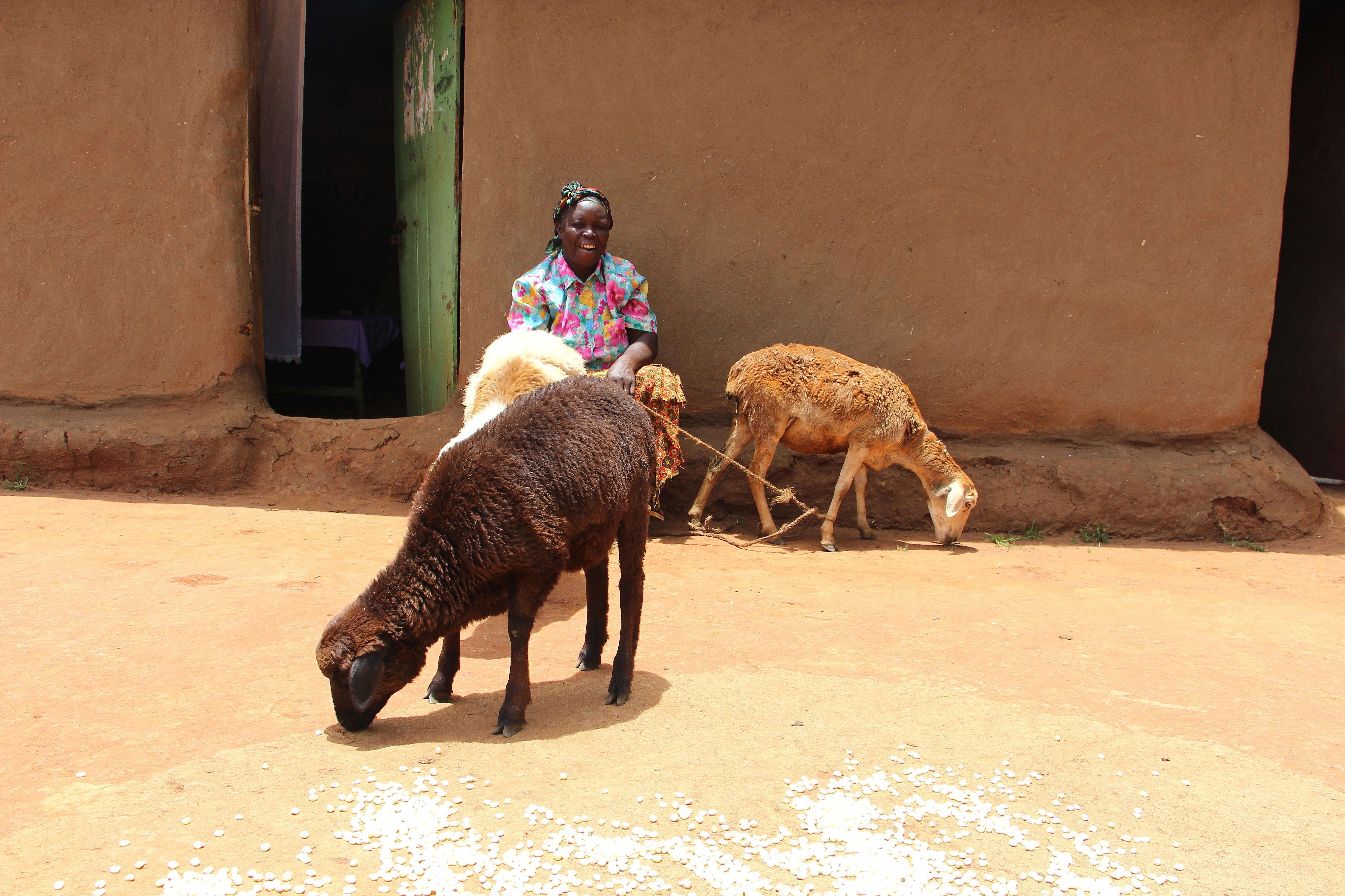 Catherine Mkangula and her sheep