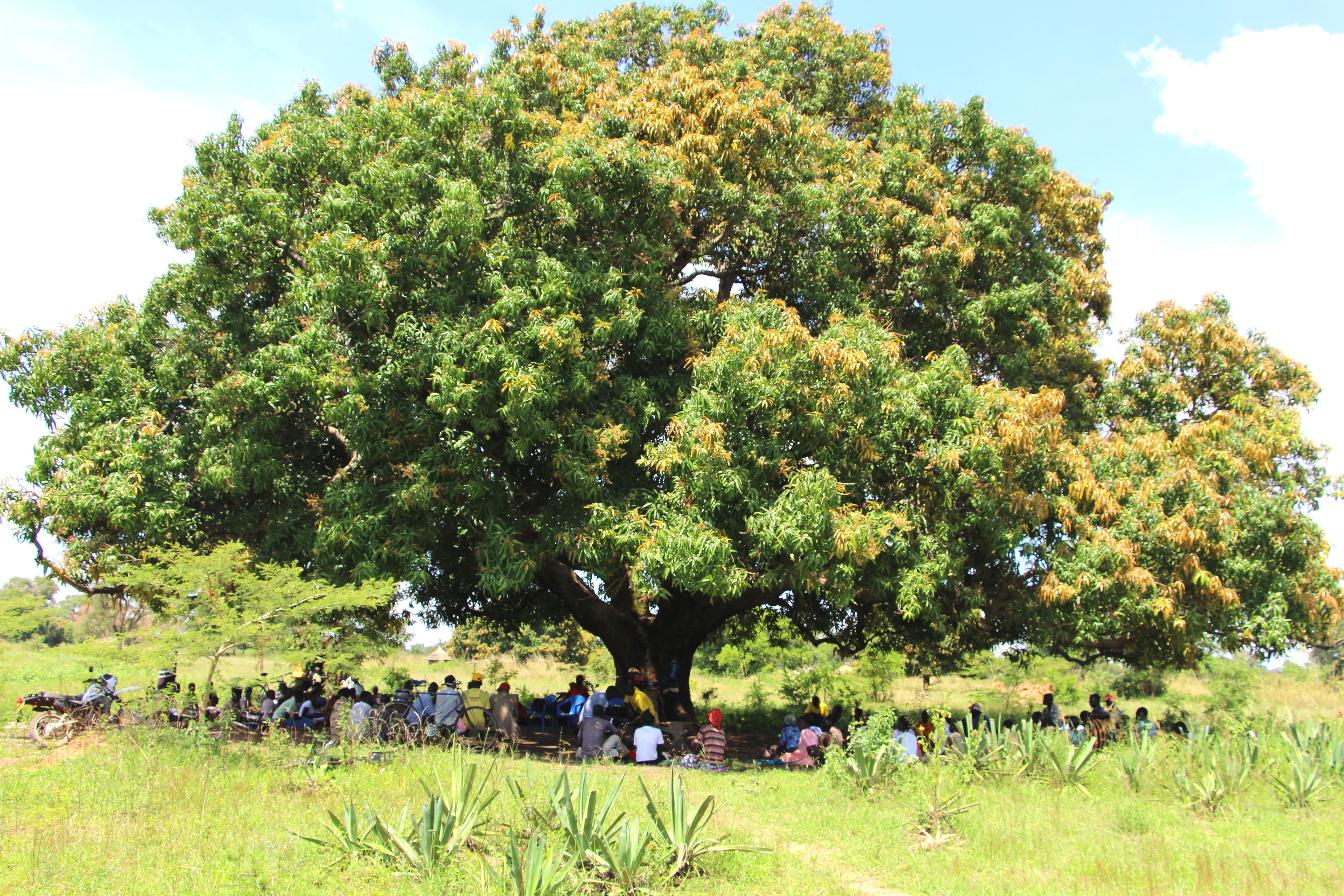 Village Enterprise Business Owners under a tree in Akisim, Uganda.