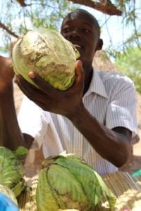 Business owner Stephen sells cabbages to eager customers