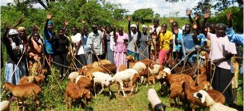 a group of African Village Enterprise business owners and their goats