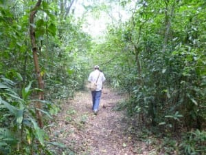Kenya Wildlife Services walking in Kenya forest