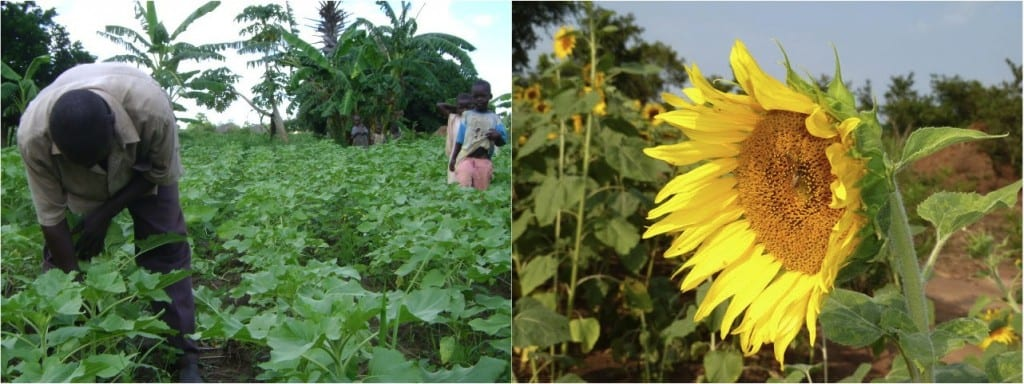 Village Enterprise business owners and sunflowers