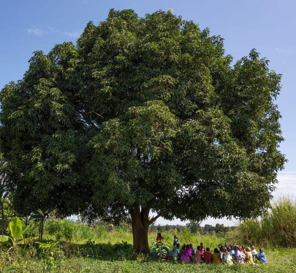 People sitting under tree